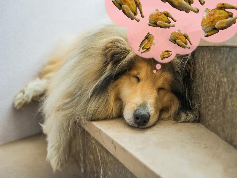 Ar šunys gali valgyti keptą vištieną?
